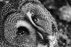 B/W-Fotografie - Fotografie in Schwarz und Weiß